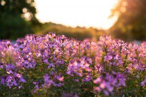 bloom-1850621_1280